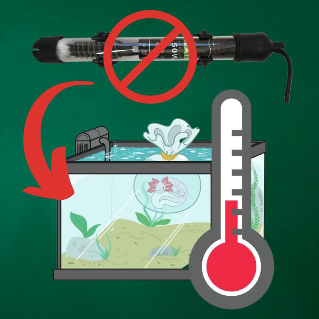 temperatura axolotl acquario riscaldatore